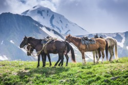 Лошади и горы