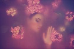 Розовая Офелия